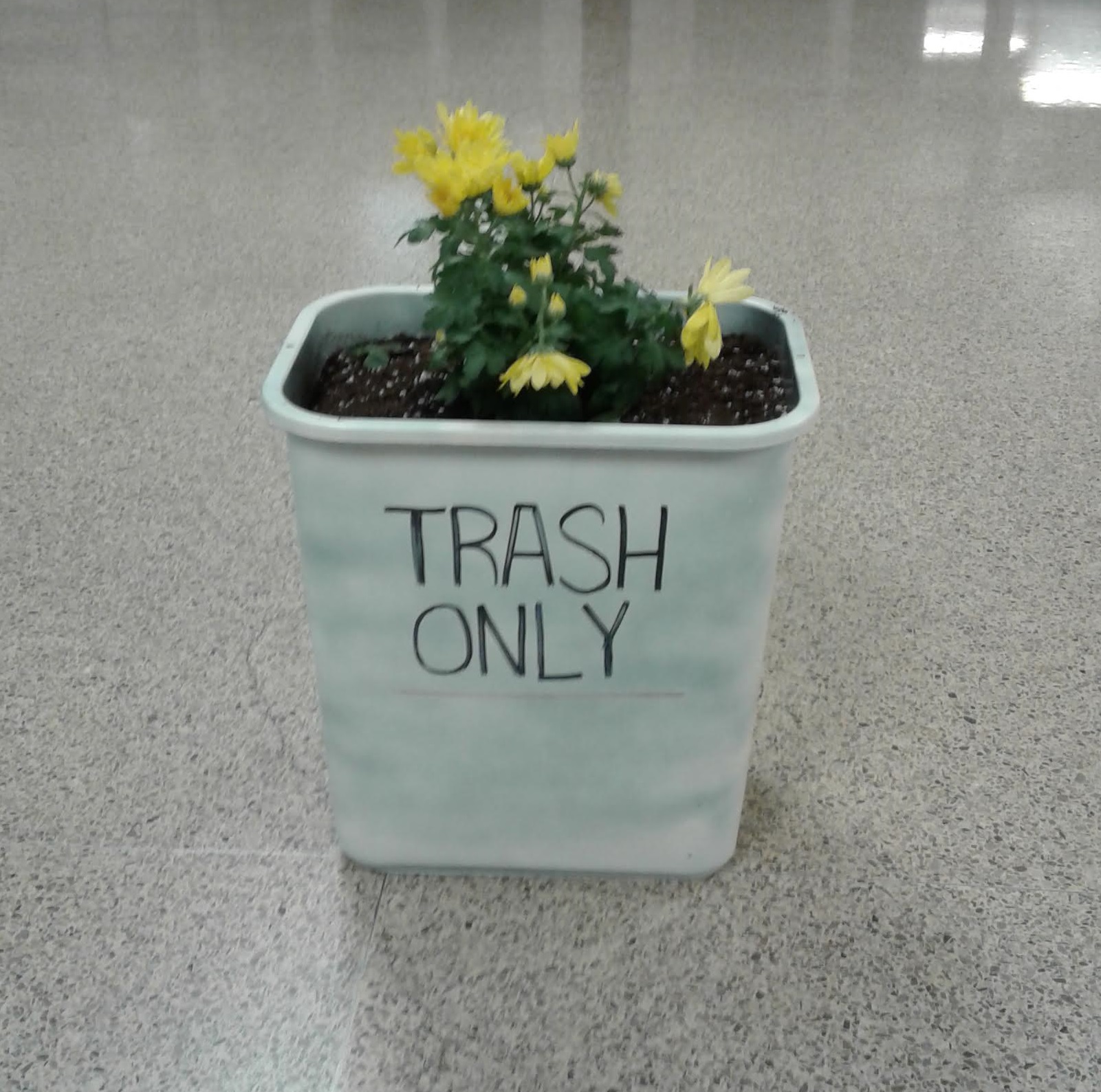 flower planted in wastebasket with sign trash only